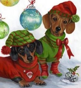 Miniature Dachshund Puppy for Sale Ready for Christmas!