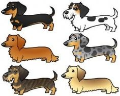 Miniature Dachshund Colors and Patterns